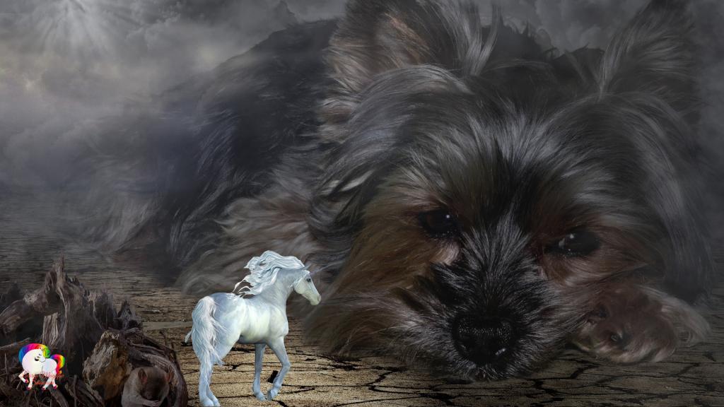 Dans un univers parallèle magique et fantastique la rencontre entre une licorne blanche et un yorkshire géant
